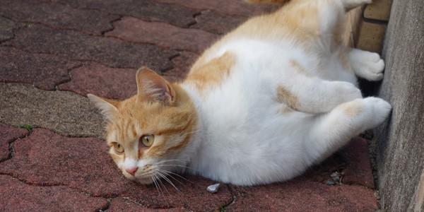 近所の猫ちゃんと天然石アクセサリー